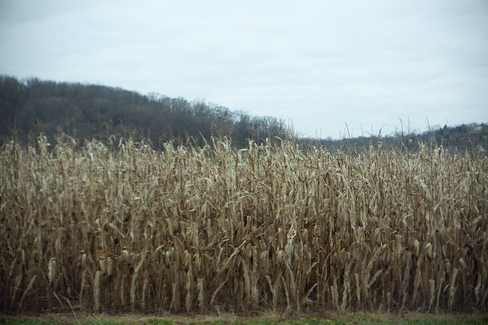 corn corn corn corn