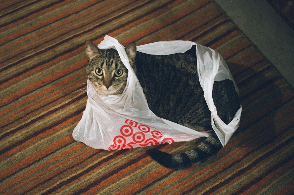Edie in bag