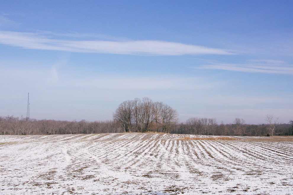 Trees, February 7, 2013