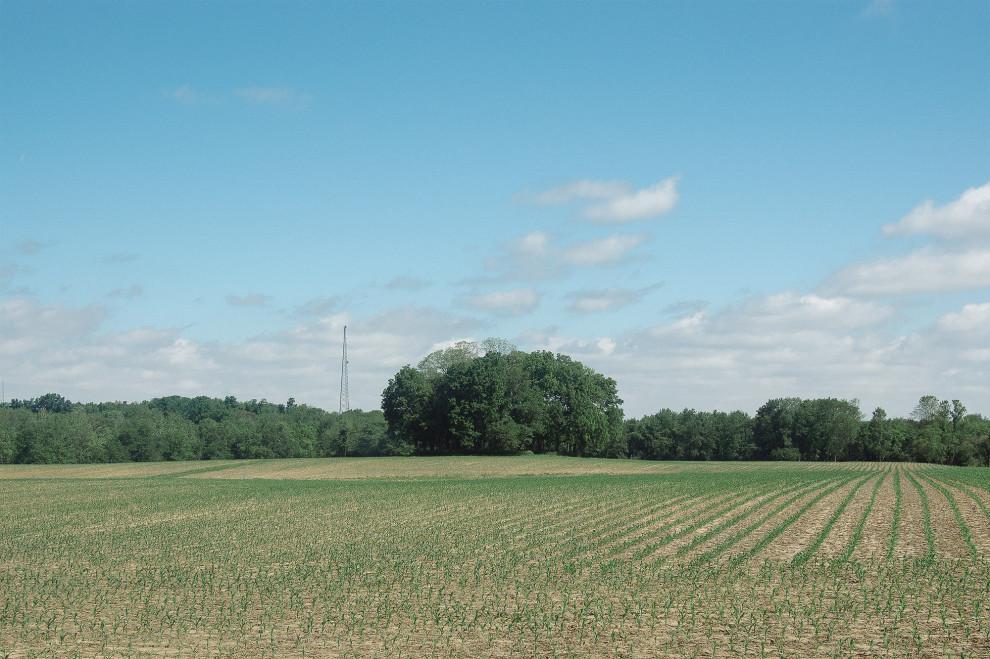 Trees, June 3, 2013