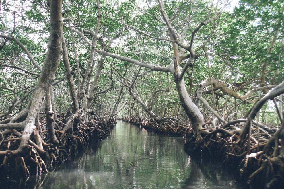 0307-mangroves