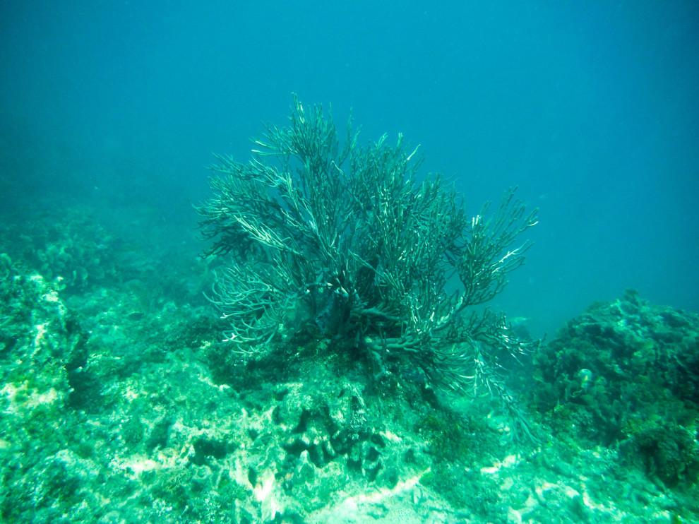 0307-underwater-03