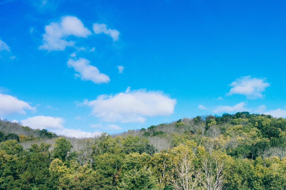 Tree disease in Ohio