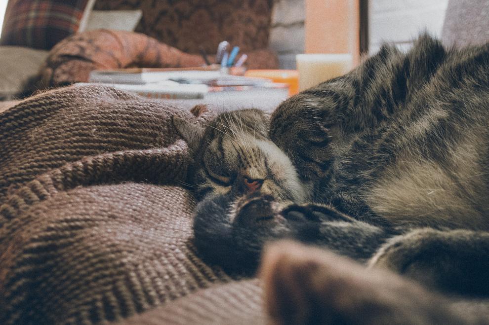 Edie Sleeps