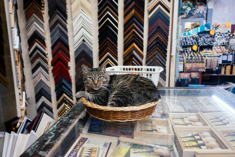 George, the Suder's Art Store cat