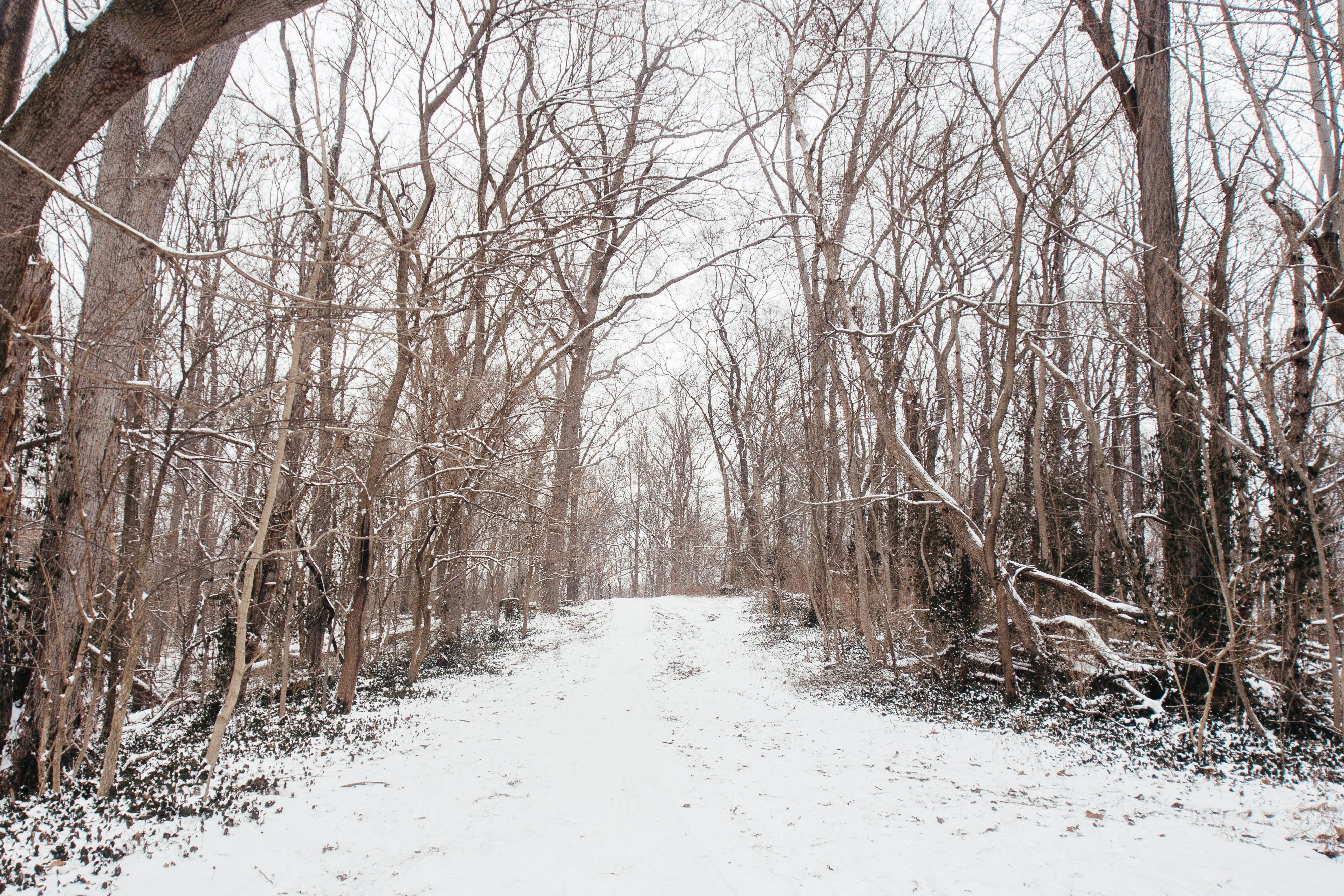 Parker's Woods