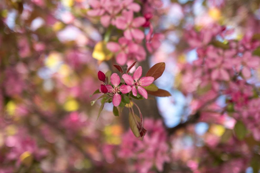 bloom-og