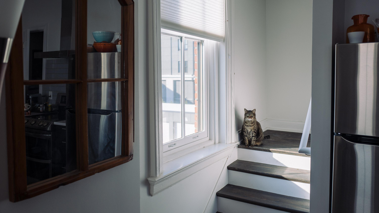 cat glare