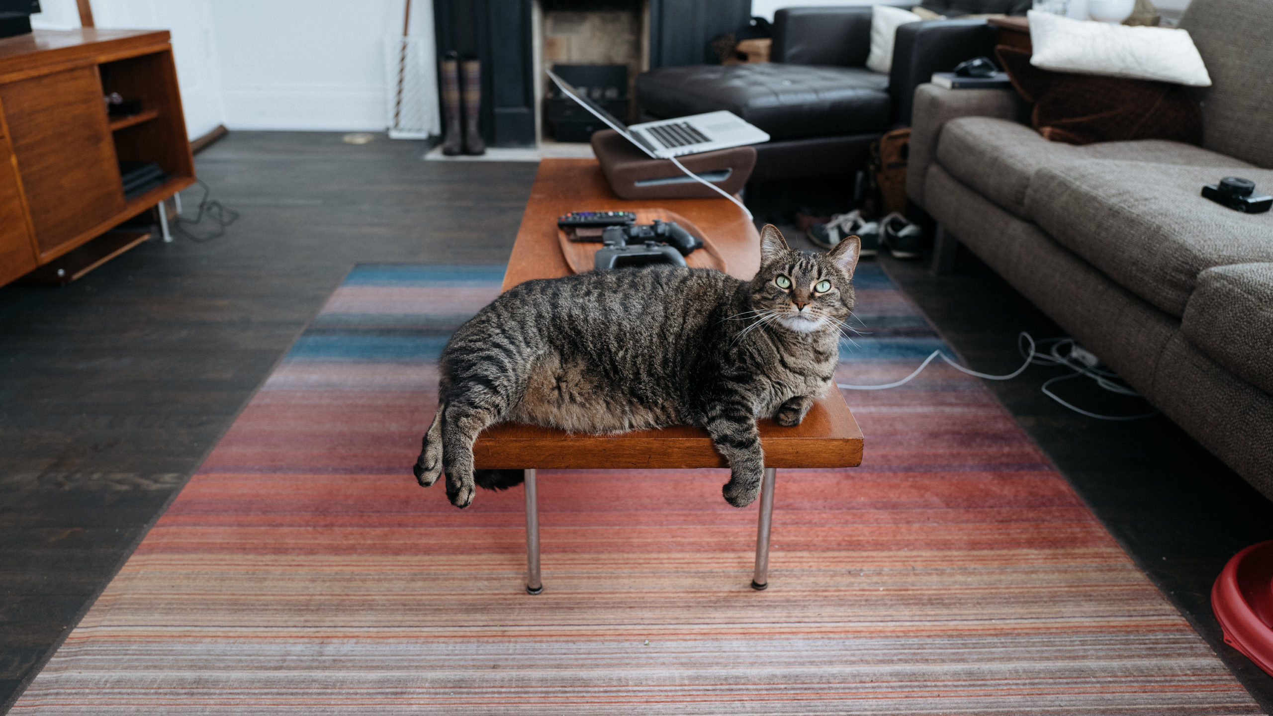 Cat on coffee table
