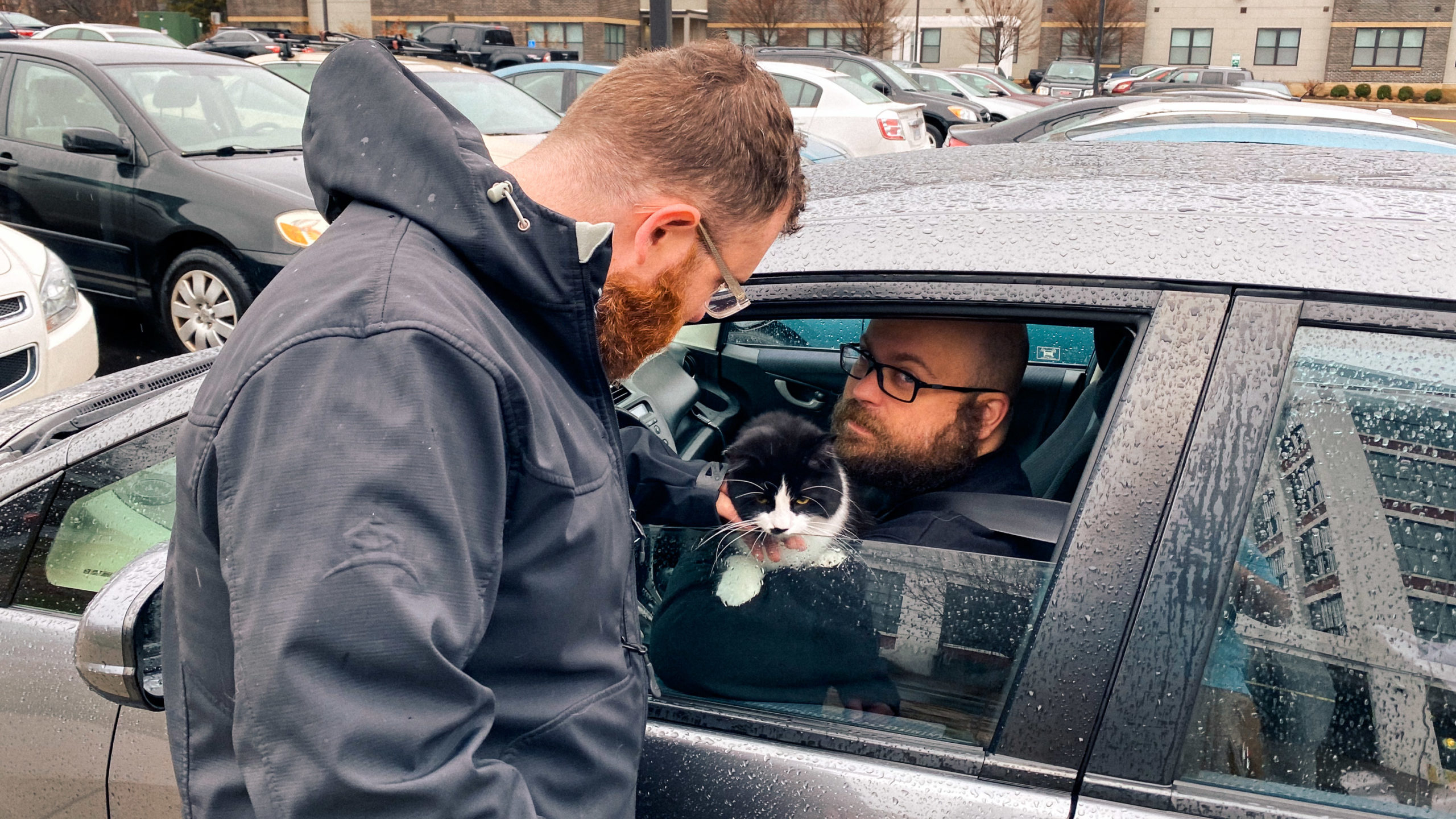 Rainy day, car, cat, beards
