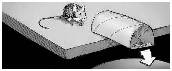 Como cazar un raton