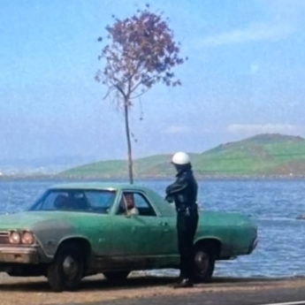 Harold and Maude rescue a tree