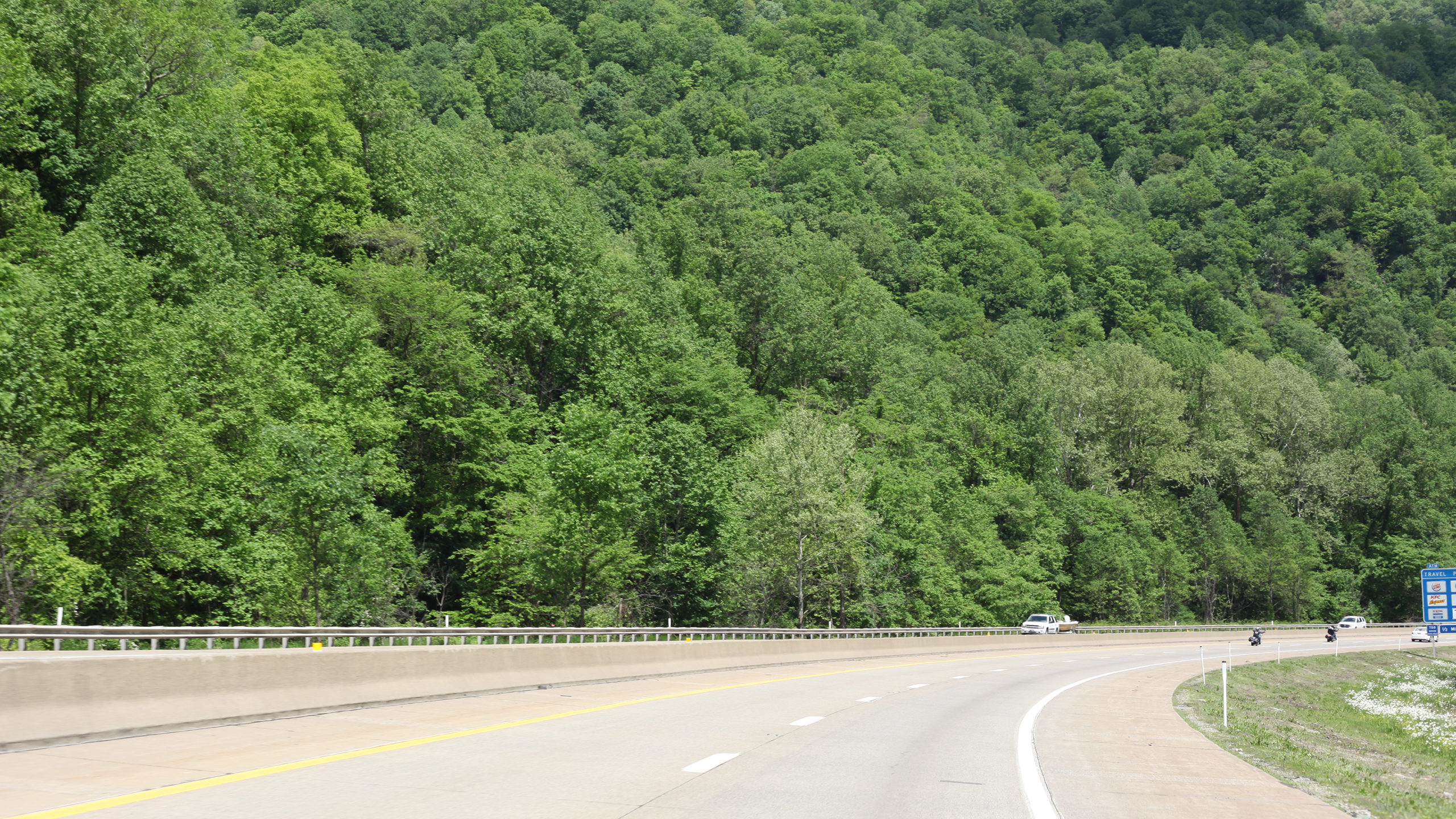 A wall of trees along a highway