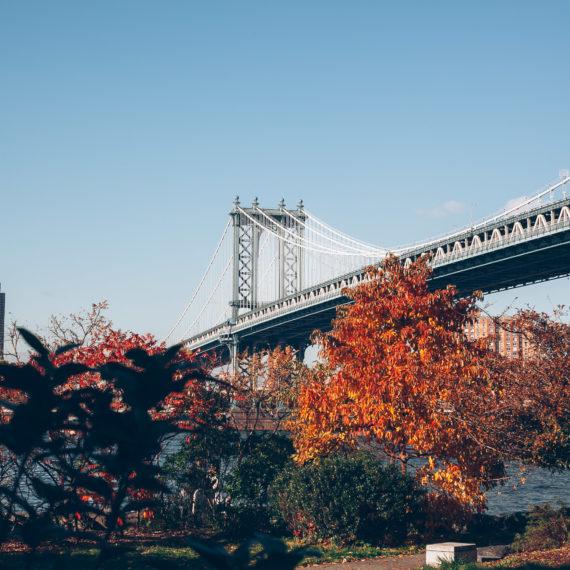 Manhattan Bridge and autumn trees