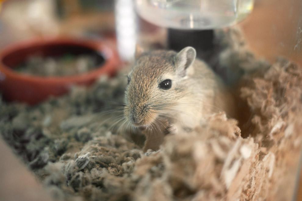 a hamster eating cardboard