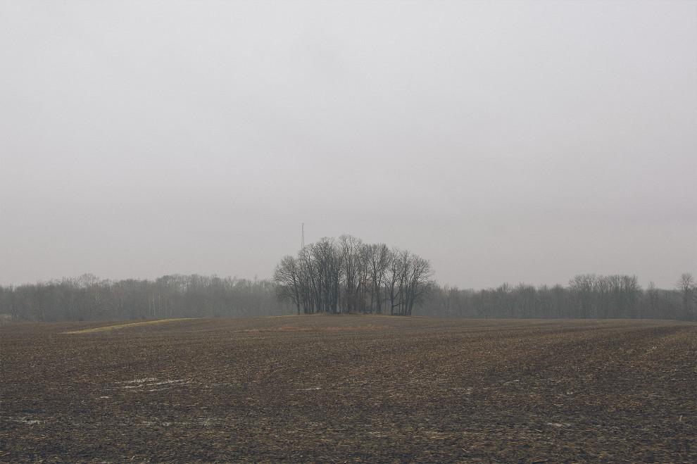 Trees, February 26, 2013