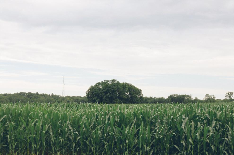 Trees, July 10, 2013