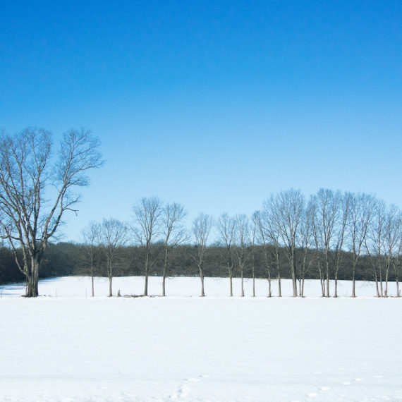 a field with a few barren trees, snow on the ground and a blue sky