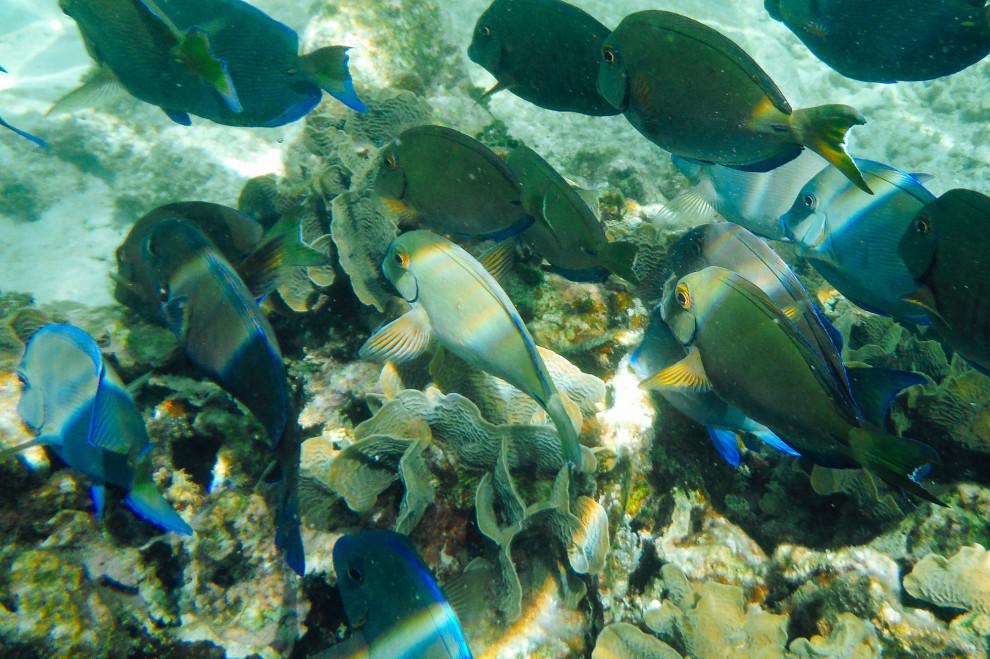 0307-underwater-02