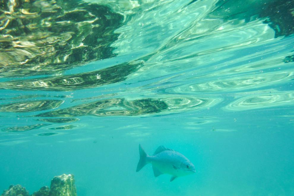0307-underwater-07