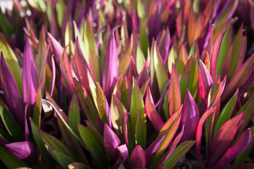 0309-plant