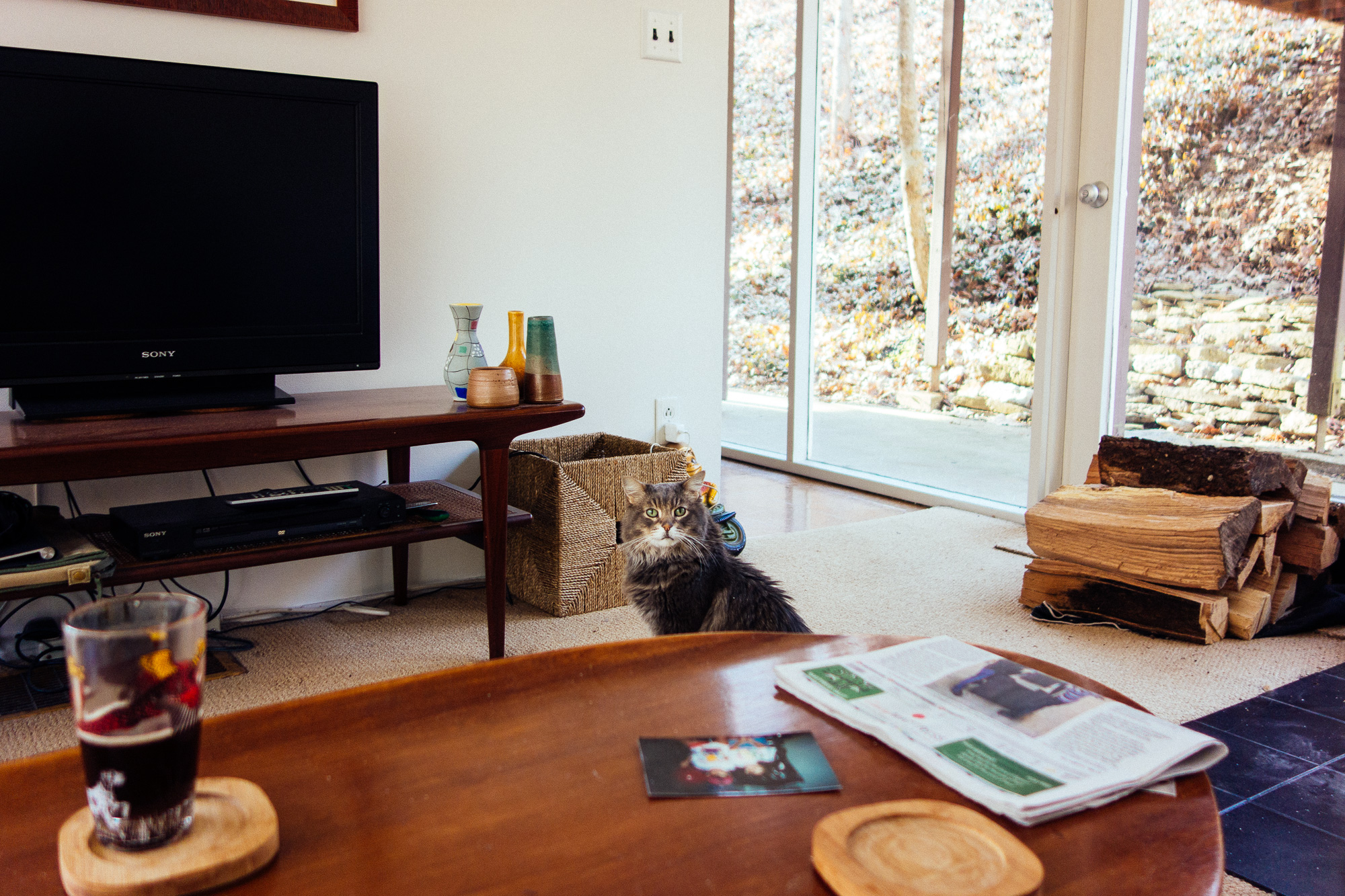 A kitty cat in a living room
