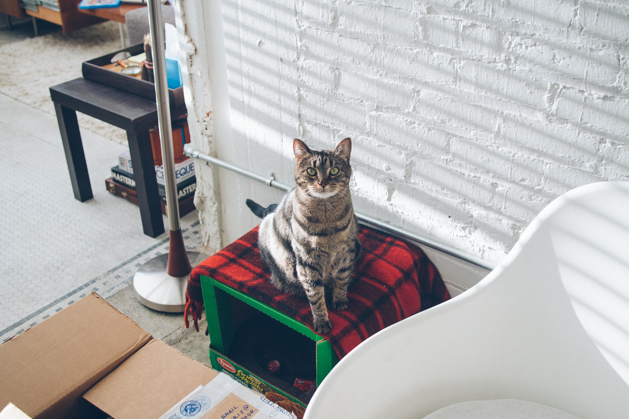 Cat in box with blanket