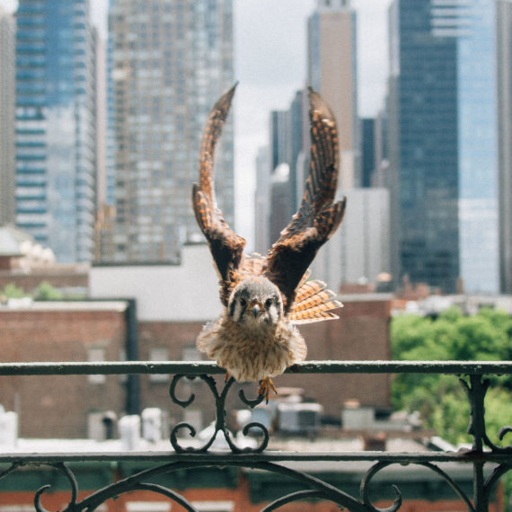 A bird flying toward a window