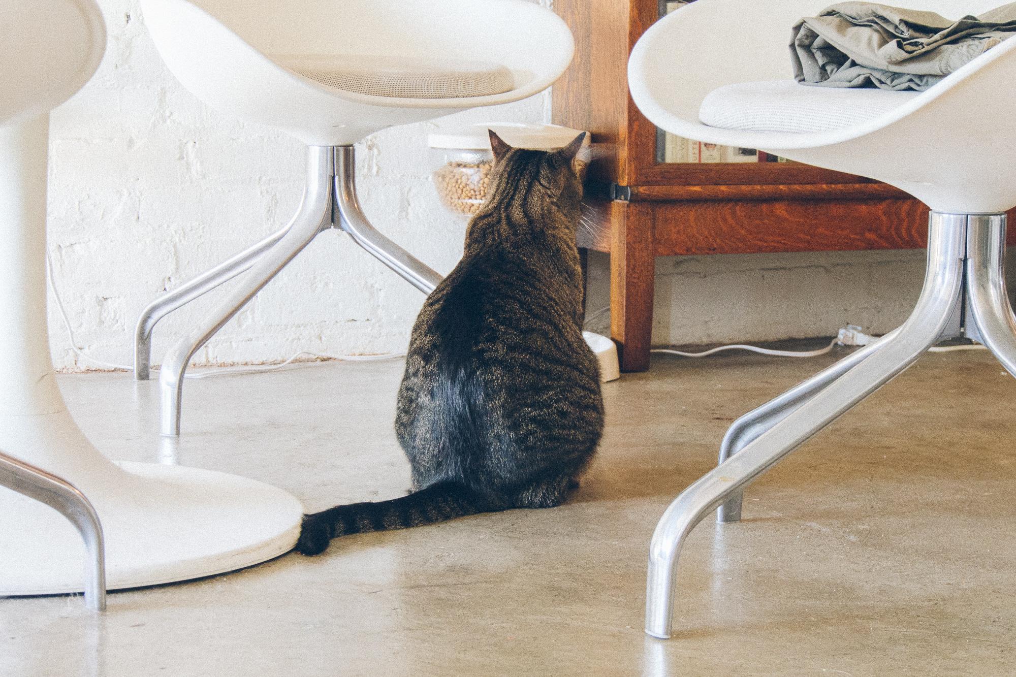 A cat stares at a food dispenser