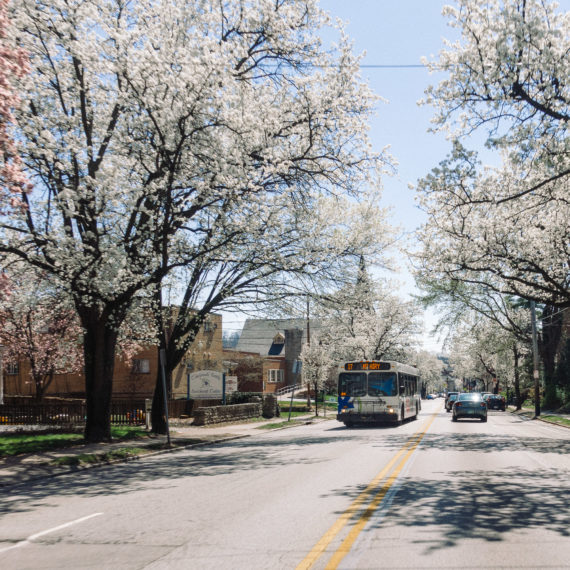 A bus on a tree lined Street in spring