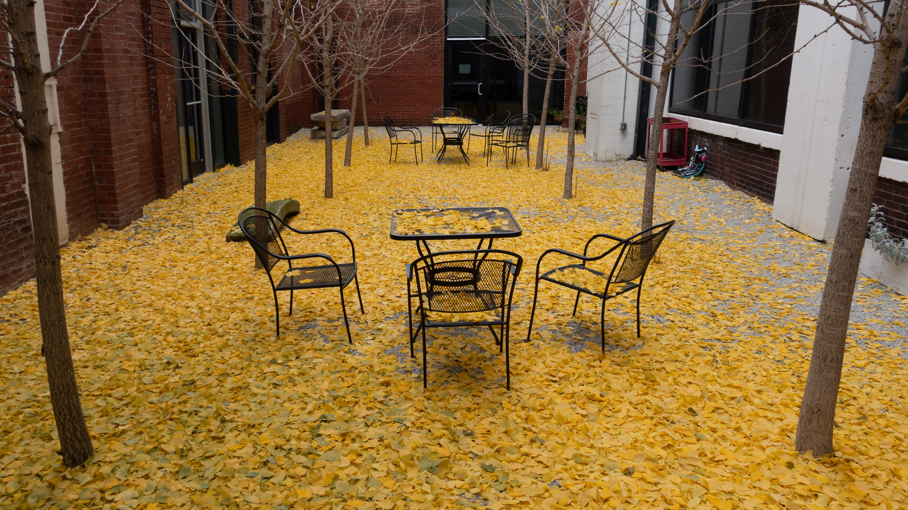 Ginkgo leaves on ground