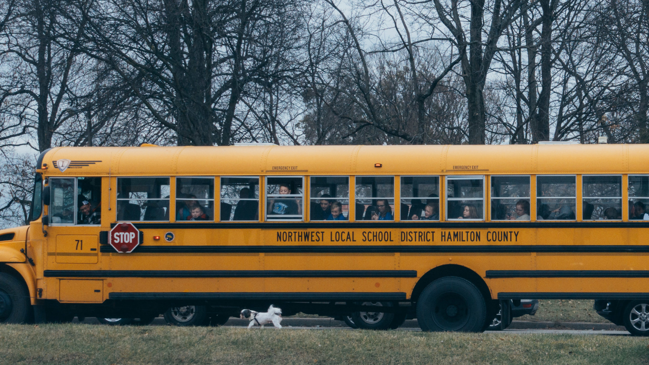 Kids look outside the windows of a yellow school bus to watch a dog