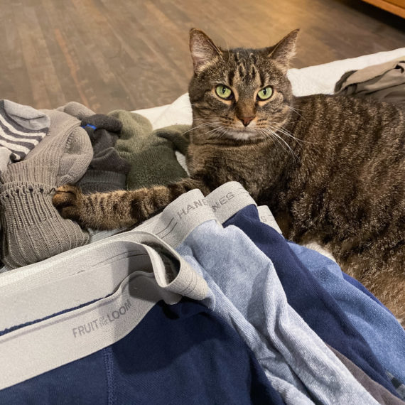 Cat by socks and underwear