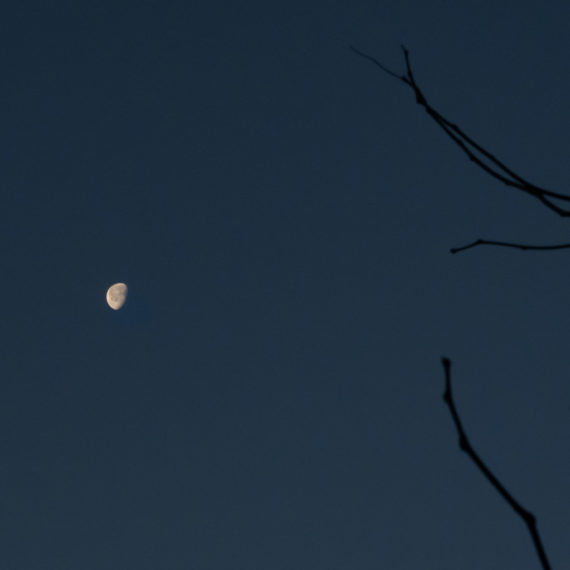the moon from far away, with branches in the foreground