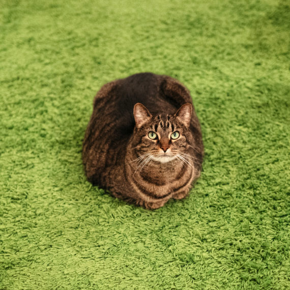 Loaf of cat on green rug