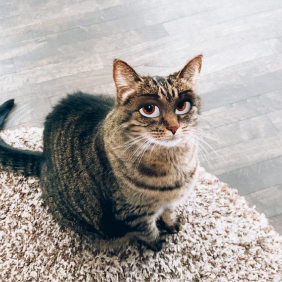 Cat with digital filter of cartoon eyes