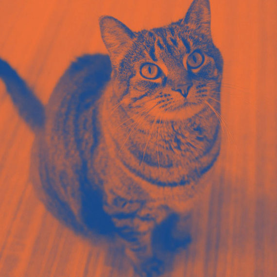 A cat done in duotone of orange and blue