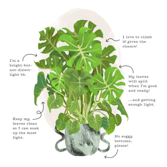 An illustrated plant with callouts for car instructions