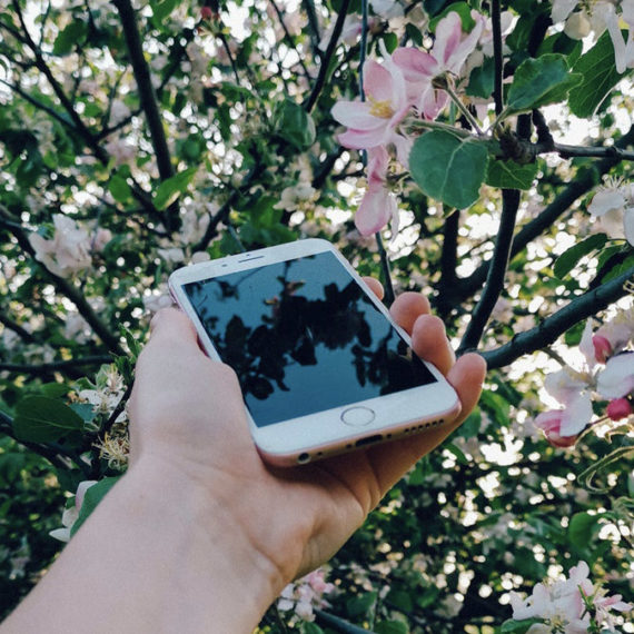 A hand holding a mobile phone reflecting a tree in bloom