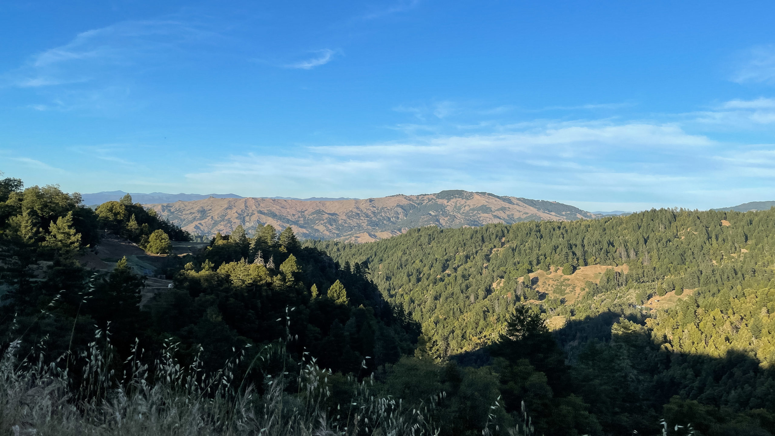 California mountains and hills covered in trees with a blue sky