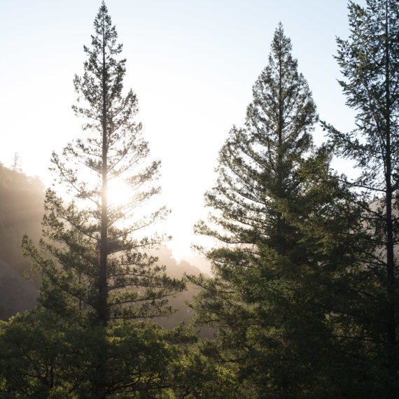 Sun rises over wooden mountains with fir trees in the foreground