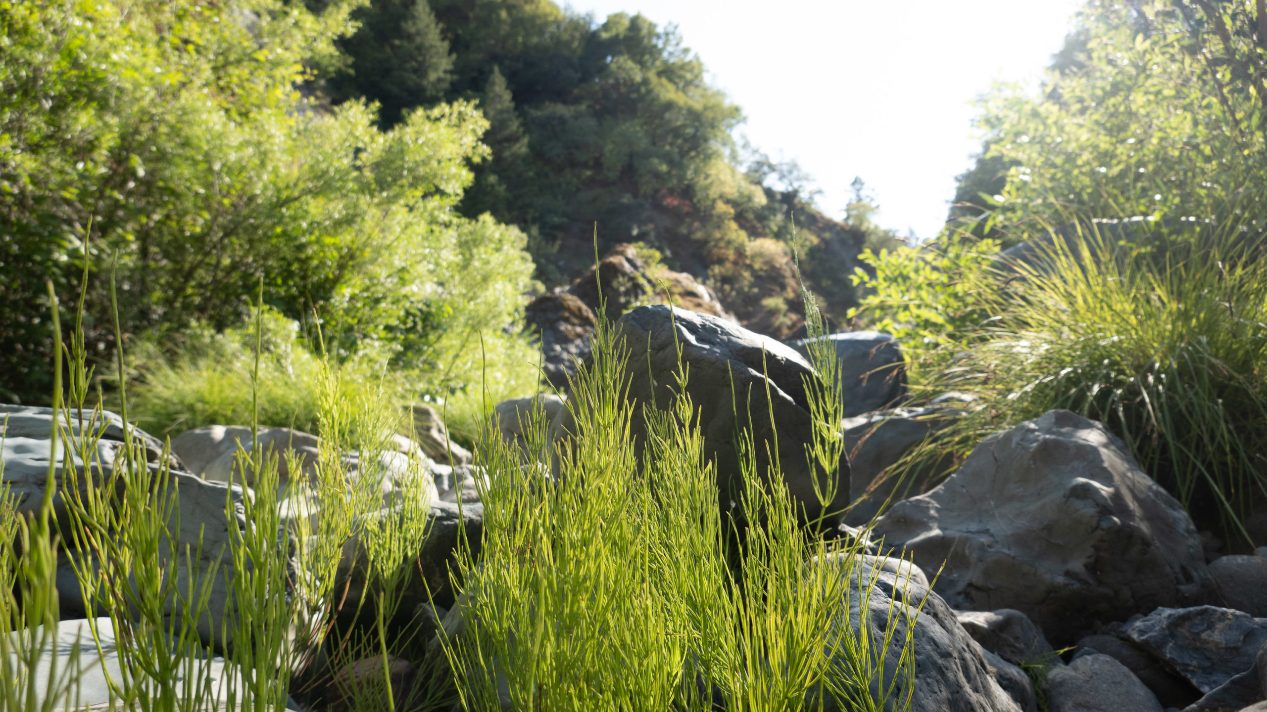Vegetation grows between rocks in a California creekbed