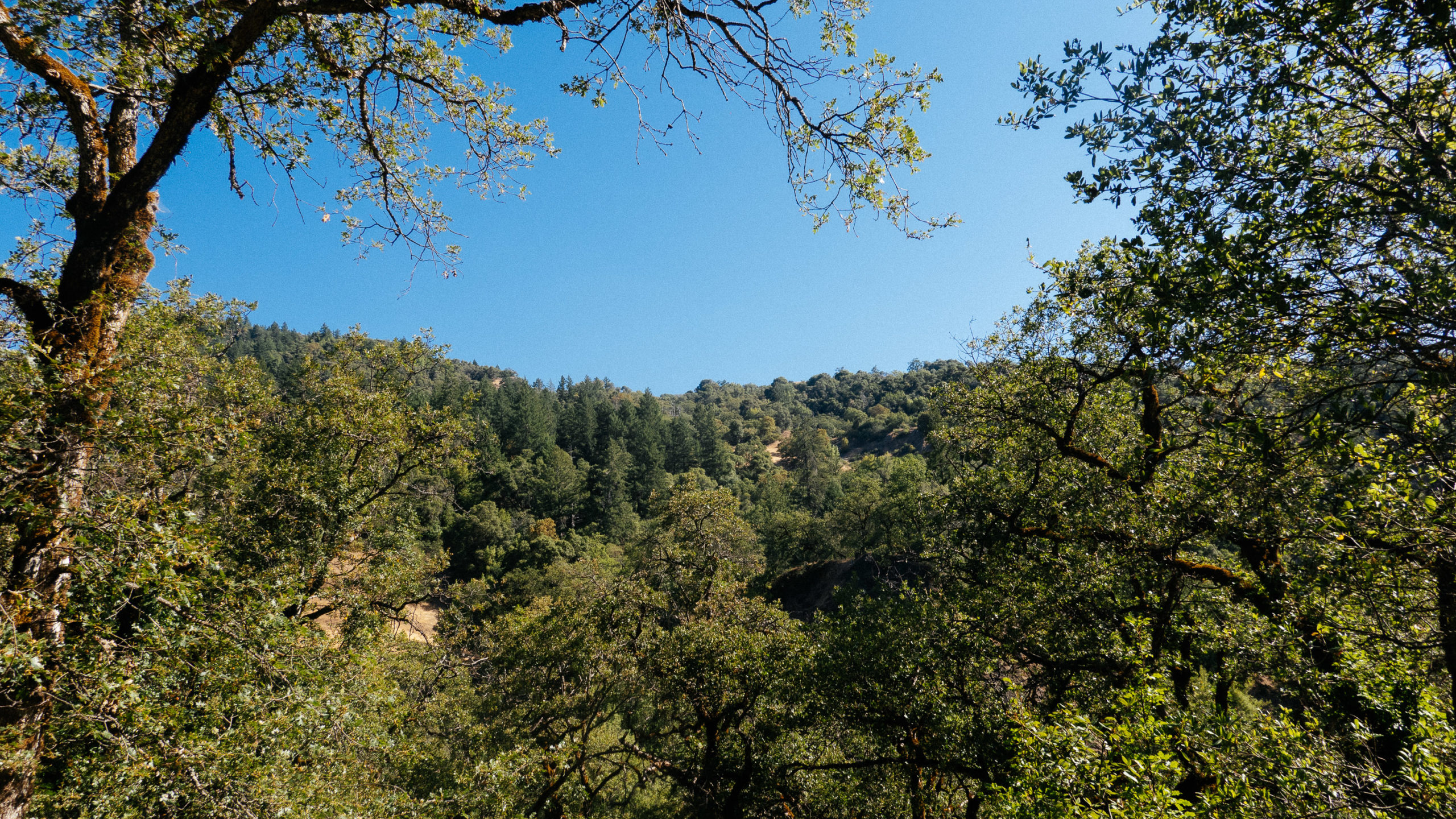 Tree covered hill and blue sky in Northern California