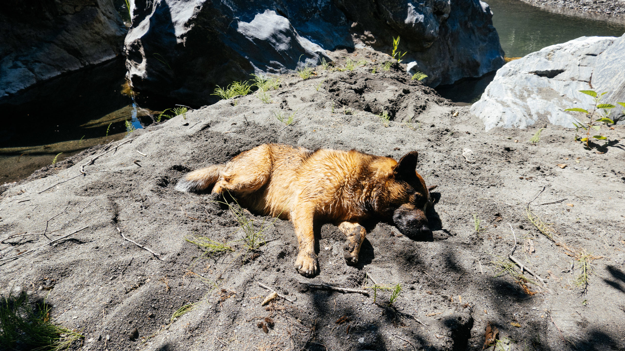 A dog lays in the sand at the side of a creek