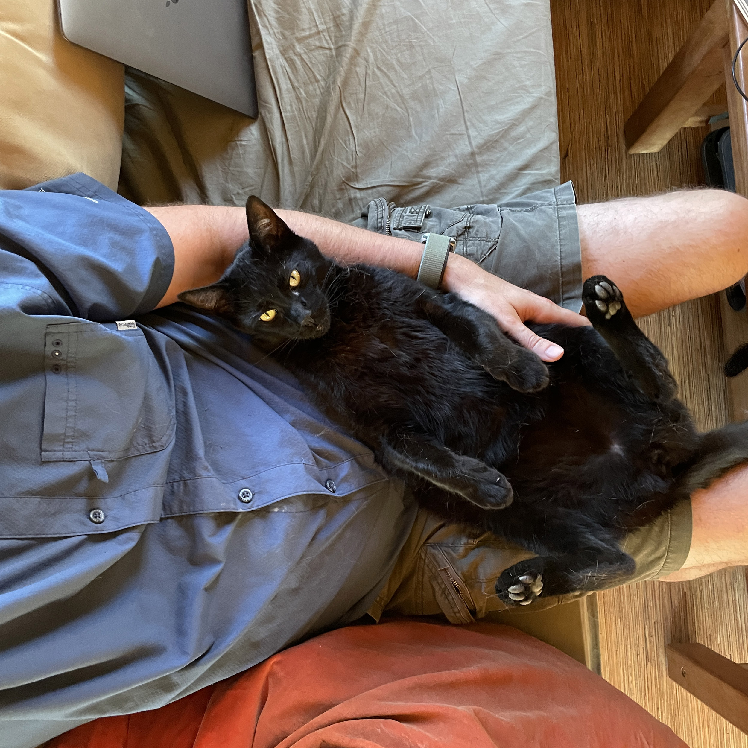 A black cat occupies the lap of a man and looks toward the camera overhead