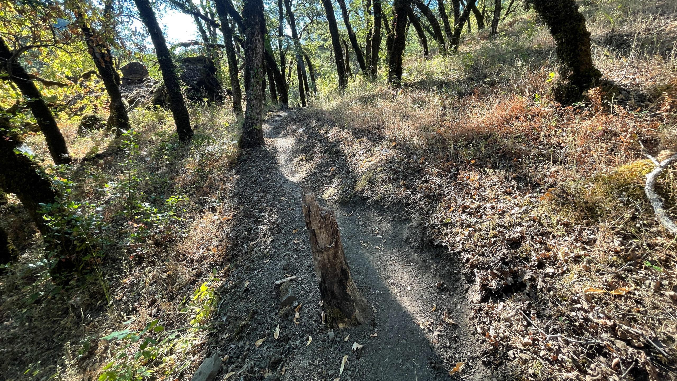 Hiking path with stump