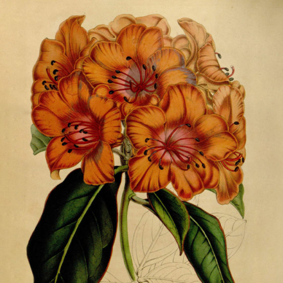 An illustration of orange flowers