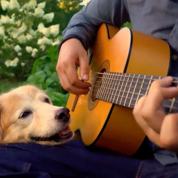 A golden retriever rests their head on the leg of a person playing an acoustic guitar