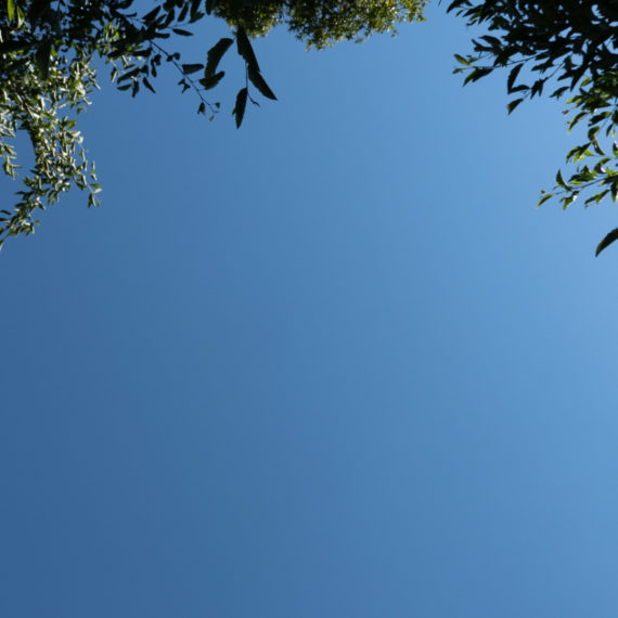 Blue skies framed by an edge of a tree canopy