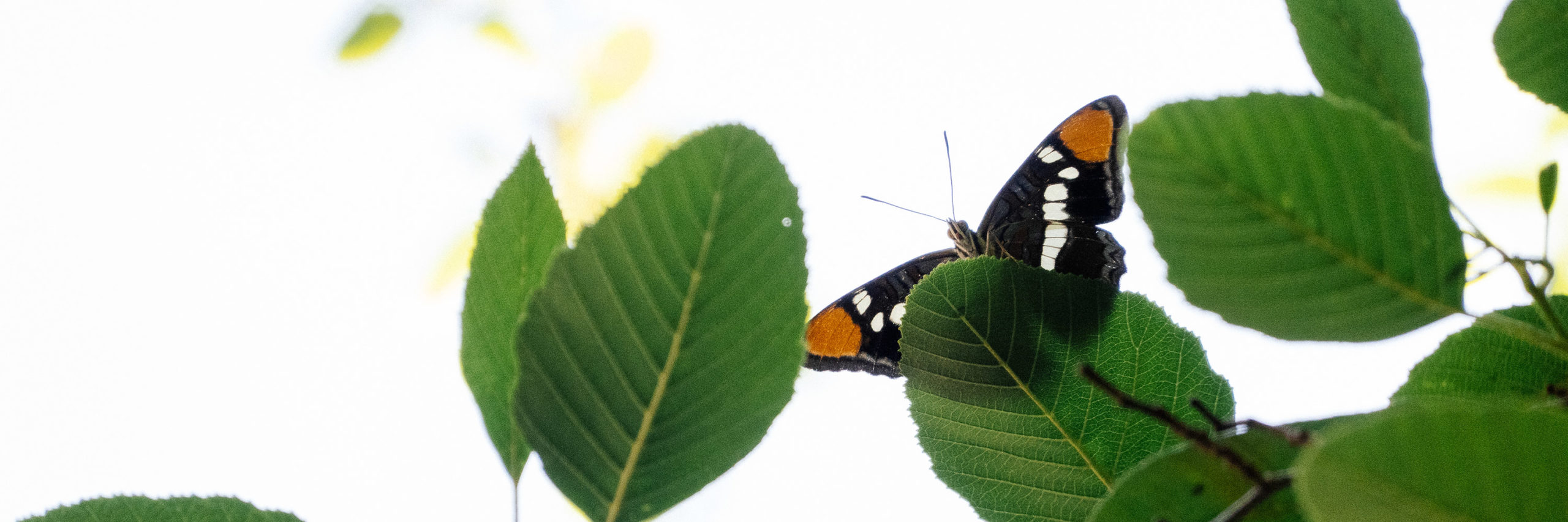 A butterfly rests on a branch of a tree, surrounded by leaves backlit by the sun